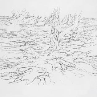 Schaduw van de perenboom